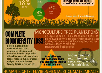 Woody Biomass - Energy