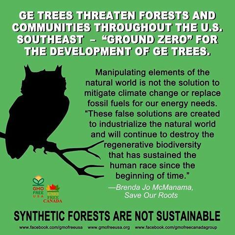 resilient forests, indigenous environmental network,genetic modification, ge trees, genetically modified organism, forest protection