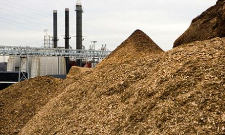 Biofuel or Biofraud?